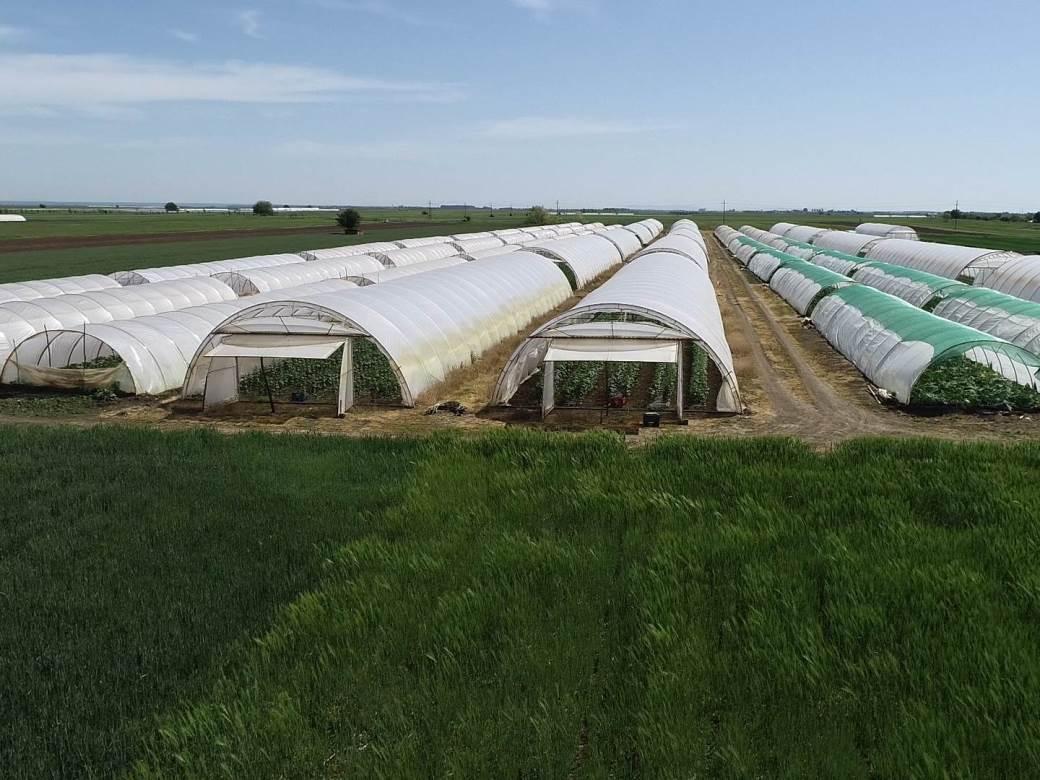 plastenik, plastenici, poljoprivreda
