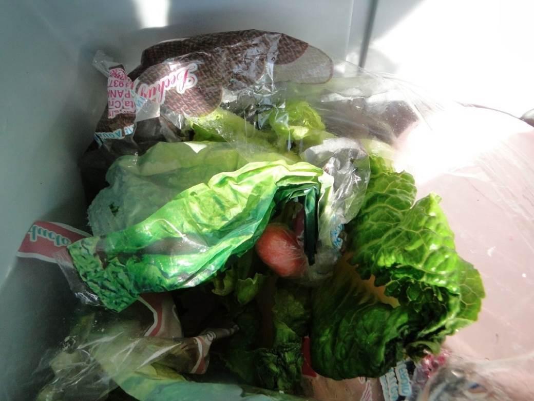 Zelena salata 2.jpg