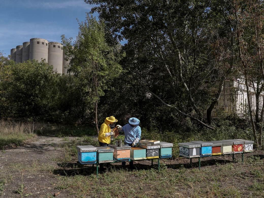 pčele pčelar pčelarstvo košnice pčelari pčela