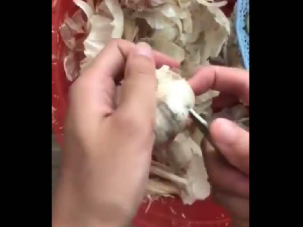 beli luk ciscenje.png