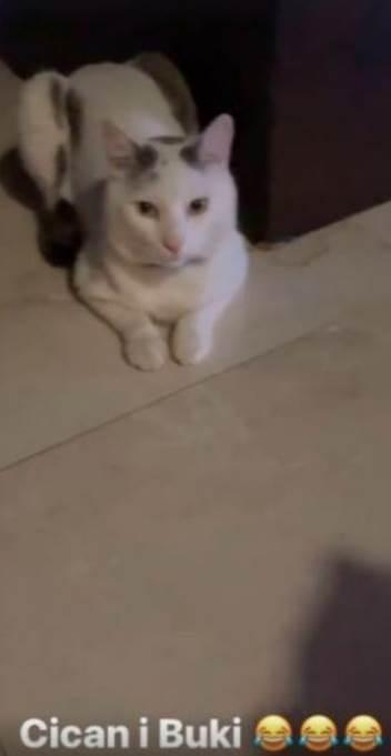 karleuša mačka