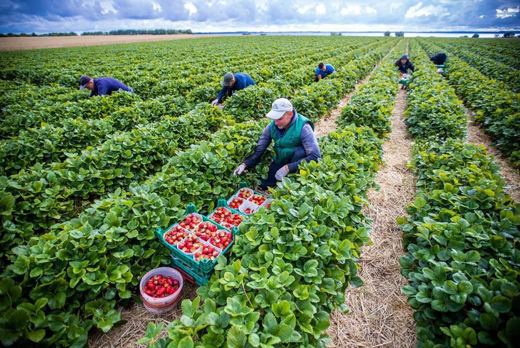 sezonski radnici