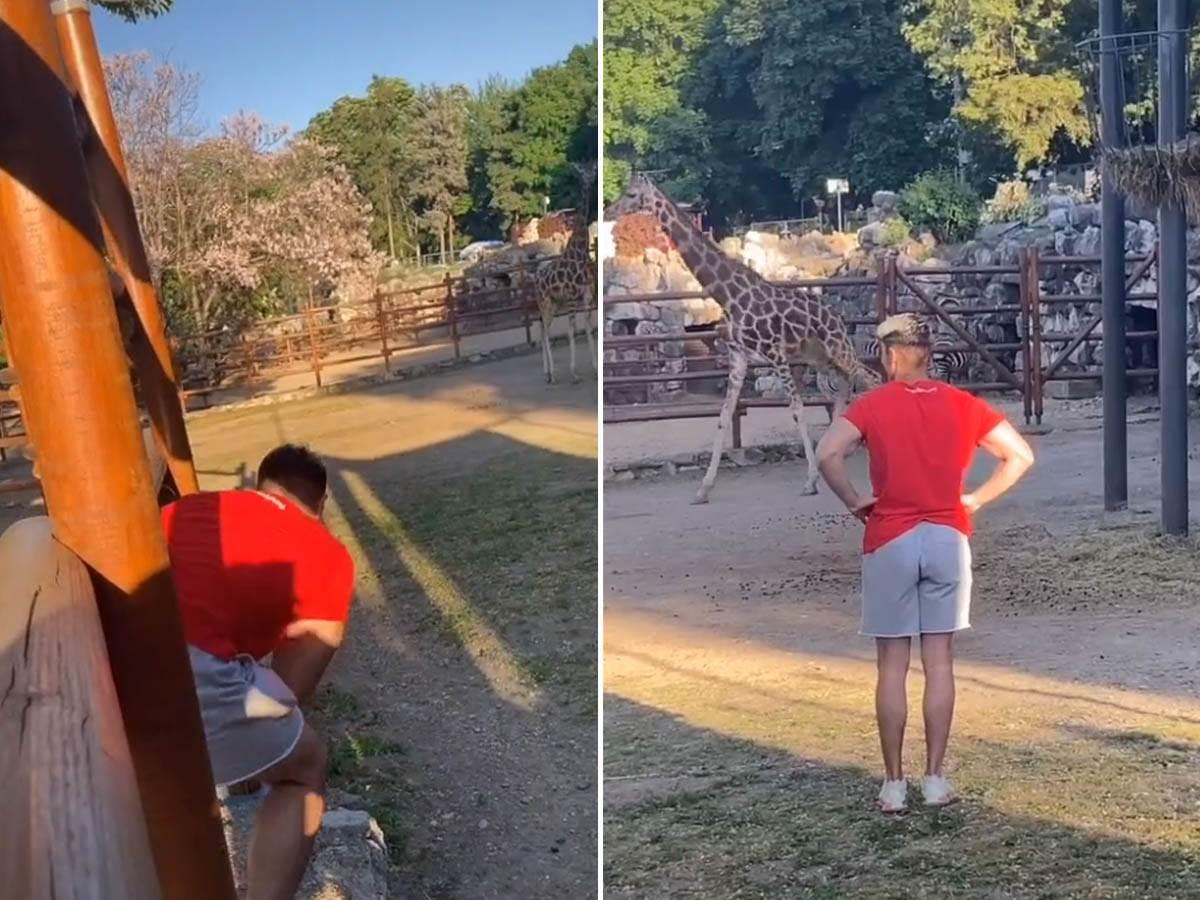 ludibrat kod žirafe