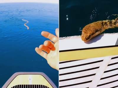 morska-zmija