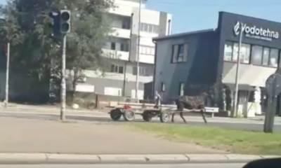 Konj juri Beogradom