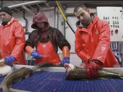 Tranžiranje ribe Aljaska