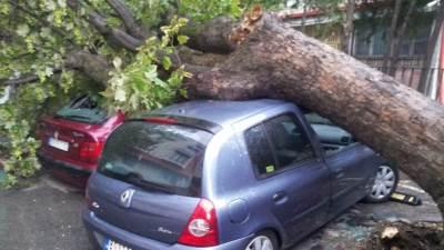 palo drvo