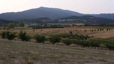 Zlatibor, planina, voćnjak