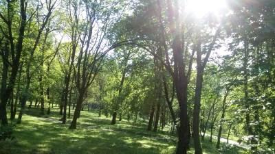 šuma, drveće, drvo