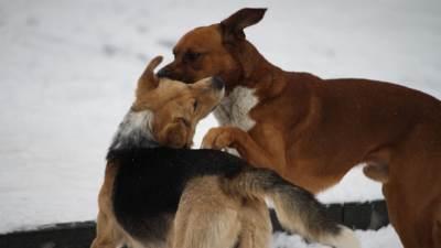 psi, lutalice, snijeg