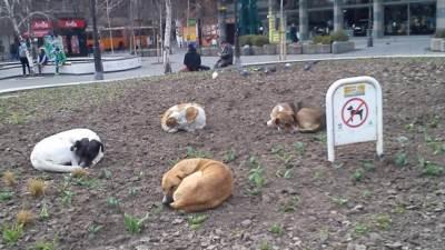 lutalice psi pas lutalica životinje azil ker kerovi