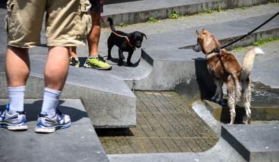 psi, kupanje, fontana, vrućina,