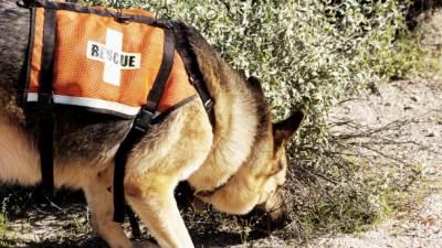 pas nestao nestanak potraga policija psi granica carina zaplena