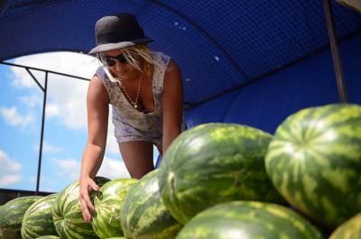 lubenice, prodaja, autoput, žabalj, zabalj, devojka, devojke, prodaju, pored puta,