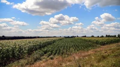 nebo, njiva, kukuruz, priroda, zemlja, oblaci,