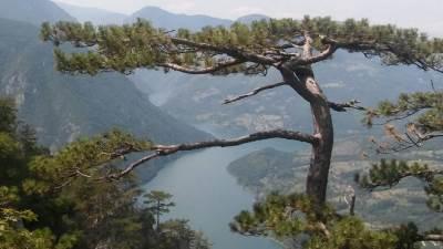 Tara, planina Tara, planina, Drina