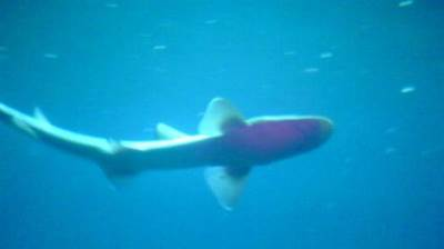 ajkula more akvarijum riba ribe