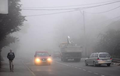 magla, drveće, priroda, magla u beogradau,