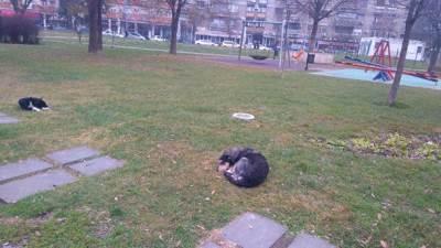 psi lutalice lutalica park