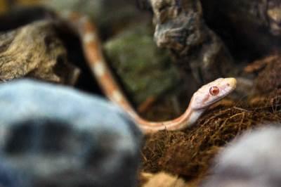 akvarijum, javni akvarijum, zmija