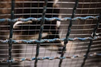ograda, žica, kavez, blokada, zabrana, ograđen
