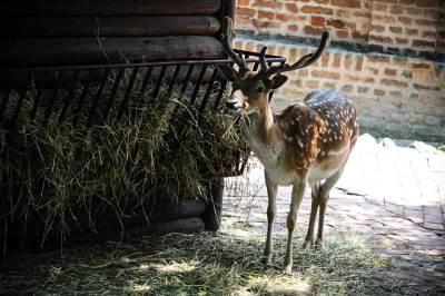 beo zoo vrt, divlje životinje, zoološki vrt, jelen