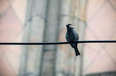 vrabac, vrapci, ptica, beograd, ptice,