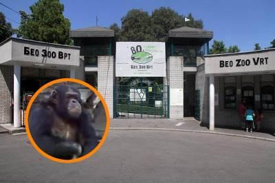 zoološki vrt sami, zoo vrt sami