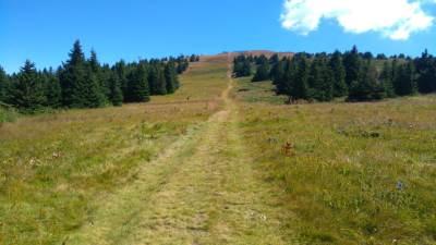 Kopaonik, planina, priroda