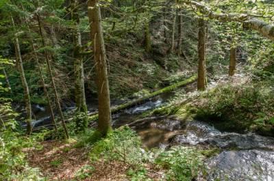priroda, šuma, reka