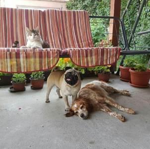kućni ljubomci, ljubimci, životinje