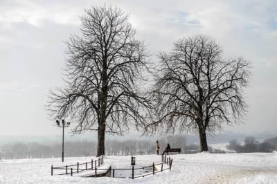 beograd, drvo, drveće, opalo lišće, zima, sneg, vreme, grad, kalemegdan, padavine, mećava, hladno