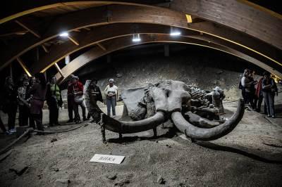 viminacijum, mamut, mamut park,
