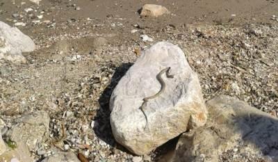 Zmija na plaži