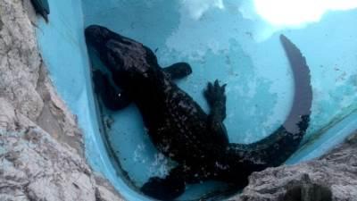 muja krokodil zoo vrt