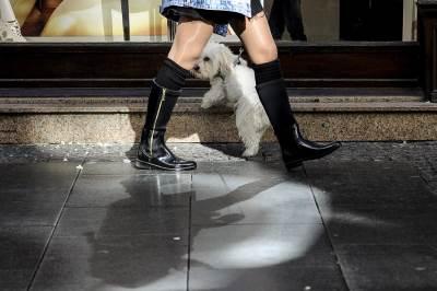 lepo vreme, knez mihailova ulica, miholjsko leto, pas