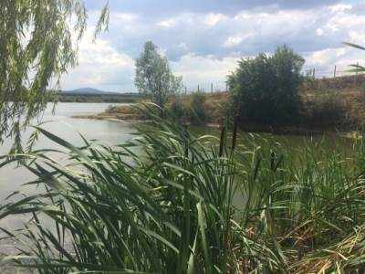 jezero, voda, šiblje, trska