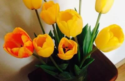 cveće, lale