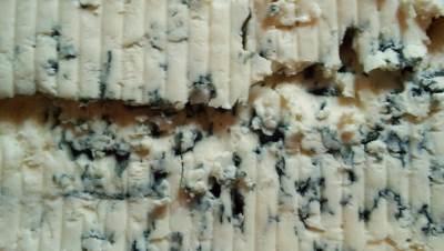 sir, plavi sir, buđavi sir, plesan, gorgonzola