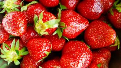jagoda, jagode, voće, voce,