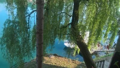 reka, čamac. drvo, vrba, vreme