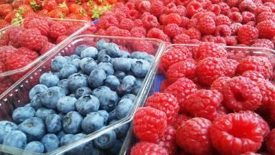 bobice, maline, borovnice, voće