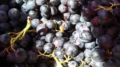 grožđe, voće