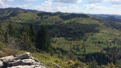 priroda, šuma, pejzaž