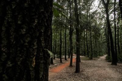 miljakovac šuma, seča drveća