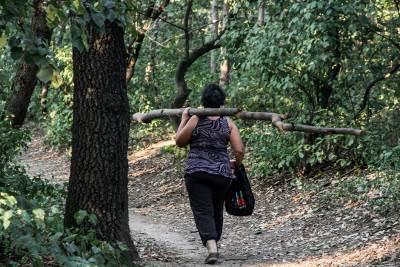 miljakovac šuma