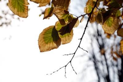 jesen, kalemegdan, godišnje doba, lišće, drvo, drveće