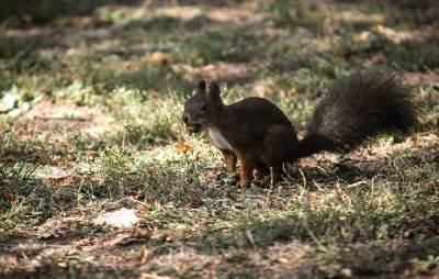 veverica, priroda, park