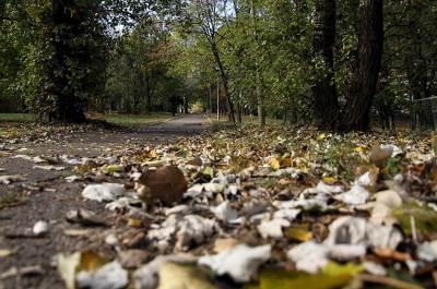 jesen, lišće, park