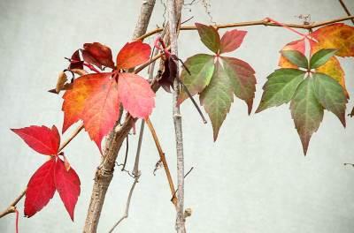 jesen, lišće,